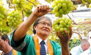 APPC celebra início da colheita da uva Pilar Moscato (Crédito: Divulgação)