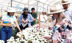 Empresa pilarense se destaca na produção de flores (Crédito: Divulgação)