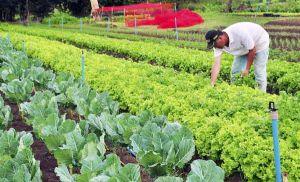 Senar lança programa gratuito de cultivo orgânico de hortaliças