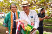 APPC celebra início da colheita da uva Pilar Moscato em Pilar do Sul