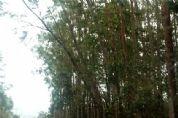 Chuva e vento forte derrubam árvores na estrada do Caxangá