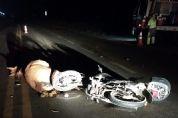 Motociclista fica ferido ao colidir e matar égua na SP-250, na Lavrinha