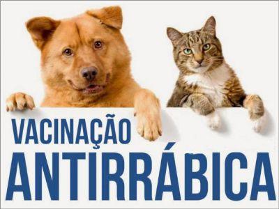 Começou a campanha de vacinação antirrábica para cães e gatos