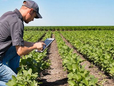Sindicato Rural contrata Instrutor Técnico Agrícola para o Senar