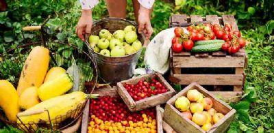 Curso de Fruticultura Básica do Senar no Sindicato Rural