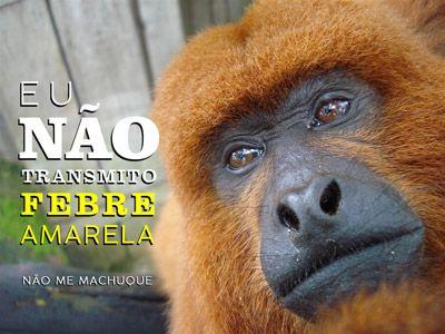 Laudo confirma primeira morte de macaco por febre amarela em Pilar do Sul