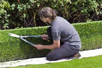 Inscrições abertas para o curso gratuito de jardineiro no Sindicato Rural