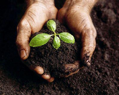 Inscrições abertas para o curso de Viveirista - Horticultura e Plantio